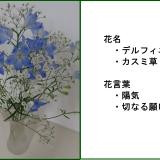 デルフィニウム・カスミ草
